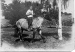 Marion Bundy riding a horse on the Oak Center farm.  Around 1920.  (Original: Mary Hundeby)